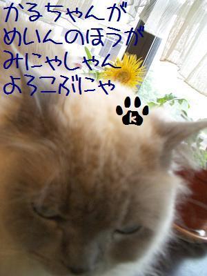 5月22日 かる3.JPG