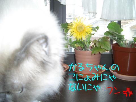 5月22日 かる4.JPG
