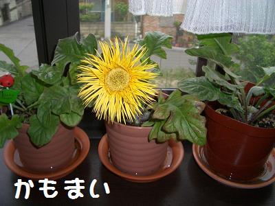 5月22日 kamomai1.JPG